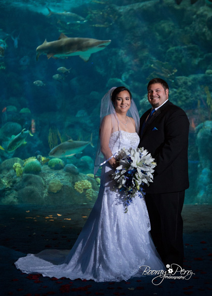 tampa aquarium wedding 13